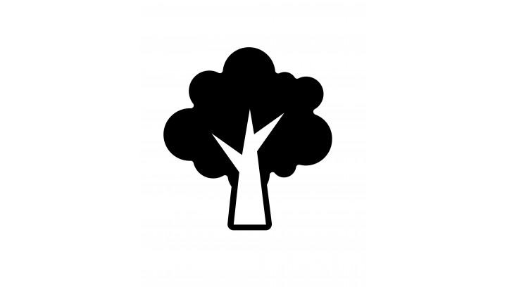 Ochrona drzew i terenów zielonychw przestrzeni miejskiej.